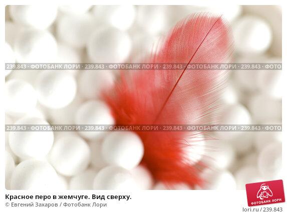 Красное перо в жемчуге. Вид сверху., фото № 239843, снято 2 марта 2008 г. (c) Евгений Захаров / Фотобанк Лори