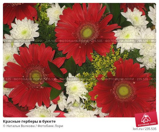 Купить «Красные герберы в букете», фото № 235535, снято 28 марта 2008 г. (c) Наталья Волкова / Фотобанк Лори