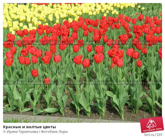 Красные и желтые цветы, эксклюзивное фото № 231, снято 10 мая 2004 г. (c) Ирина Терентьева / Фотобанк Лори