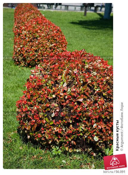 Красные кусты, фото № 56091, снято 5 июня 2007 г. (c) Argument / Фотобанк Лори