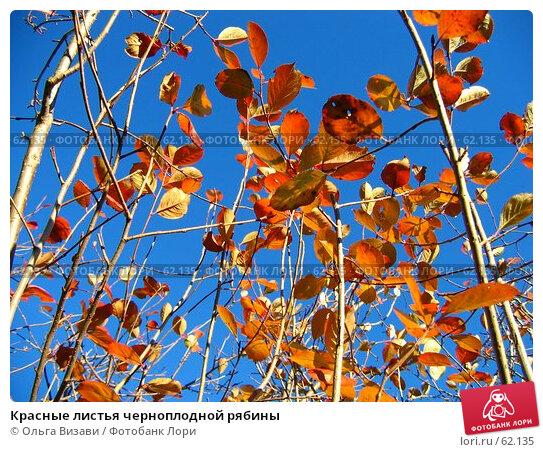 Красные листья черноплодной рябины, эксклюзивное фото № 62135, снято 16 октября 2004 г. (c) Ольга Визави / Фотобанк Лори