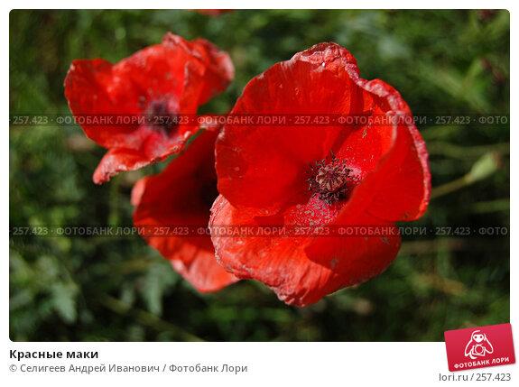 Красные маки, фото № 257423, снято 19 августа 2007 г. (c) Селигеев Андрей Иванович / Фотобанк Лори