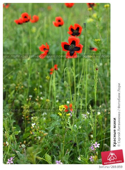Красные маки, фото № 269859, снято 2 мая 2008 г. (c) Сергей Литвиненко / Фотобанк Лори