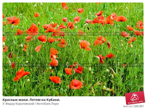 Красные маки. Летом на Кубани., фото № 320451, снято 8 июня 2008 г. (c) Федор Королевский / Фотобанк Лори