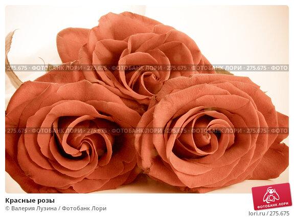 Купить «Красные розы», фото № 275675, снято 16 ноября 2007 г. (c) Валерия Потапова / Фотобанк Лори