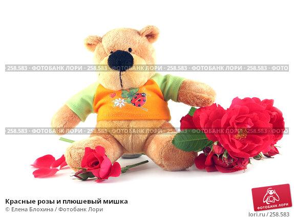 Красные розы и плюшевый мишка, фото № 258583, снято 27 июня 2007 г. (c) Елена Блохина / Фотобанк Лори