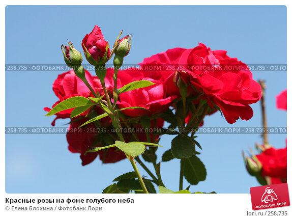 Красные розы на фоне голубого неба, фото № 258735, снято 2 июля 2007 г. (c) Елена Блохина / Фотобанк Лори