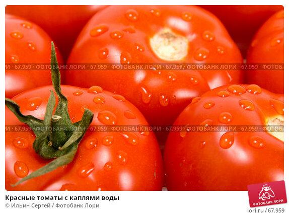 Красные томаты с каплями воды, фото № 67959, снято 6 мая 2007 г. (c) Ильин Сергей / Фотобанк Лори