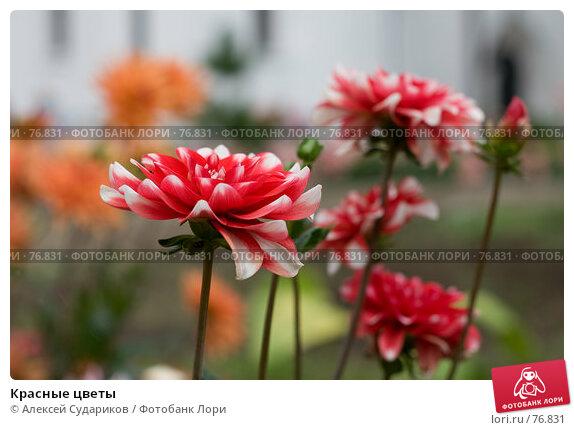 Красные цветы, фото № 76831, снято 26 августа 2007 г. (c) Алексей Судариков / Фотобанк Лори