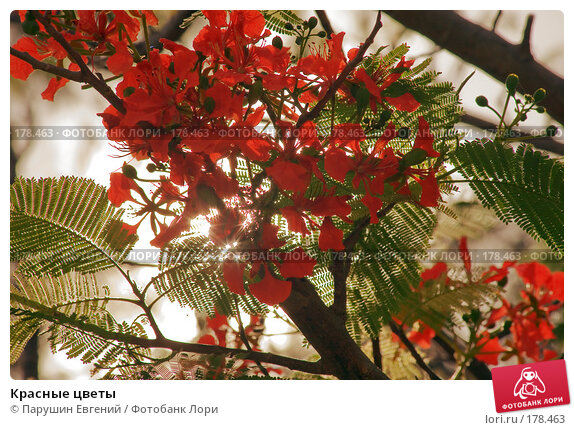 Красные цветы, фото № 178463, снято 28 октября 2016 г. (c) Парушин Евгений / Фотобанк Лори