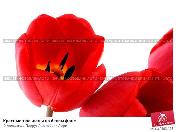 Красные тюльпаны на белом фоне, фото № 303175, снято 21 апреля 2008 г. (c) Александр Паррус / Фотобанк Лори
