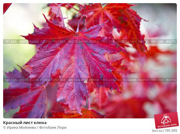 Красный лист клена, фото № 191555, снято 26 сентября 2007 г. (c) Ирина Мойсеева / Фотобанк Лори