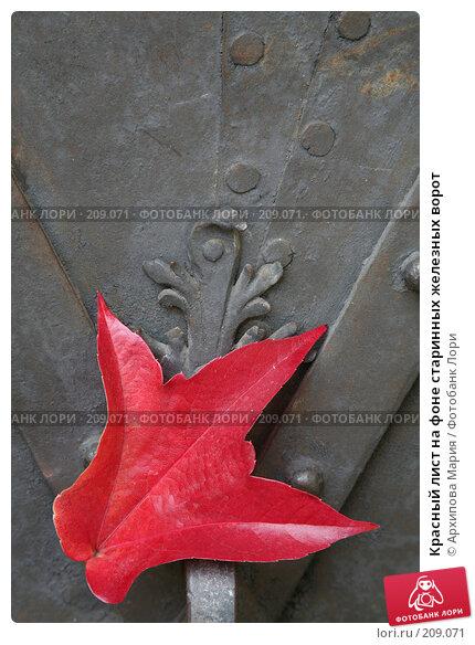 Купить «Красный лист на фоне старинных железных ворот», фото № 209071, снято 29 сентября 2007 г. (c) Архипова Мария / Фотобанк Лори