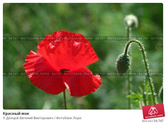 Красный мак, фото № 54747, снято 14 июня 2007 г. (c) Донцов Евгений Викторович / Фотобанк Лори