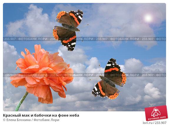 Красный мак и бабочки на фоне неба, фото № 233907, снято 24 апреля 2007 г. (c) Елена Блохина / Фотобанк Лори