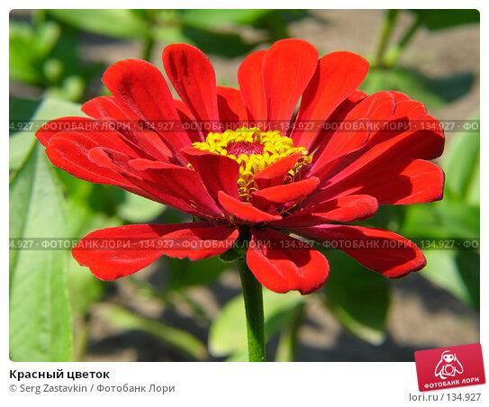 Красный цветок, фото № 134927, снято 14 июля 2005 г. (c) Serg Zastavkin / Фотобанк Лори