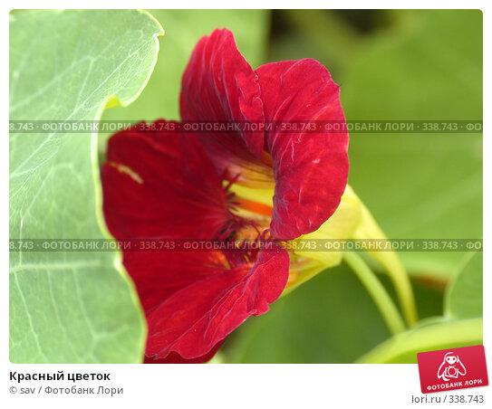 Красный цветок, фото № 338743, снято 16 июля 2005 г. (c) sav / Фотобанк Лори