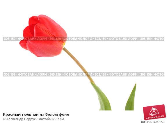 Красный тюльпан на белом фоне, фото № 303159, снято 21 апреля 2008 г. (c) Александр Паррус / Фотобанк Лори