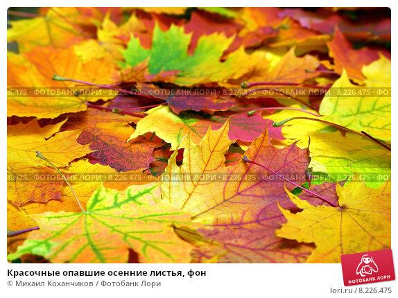 Красочные опавшие осенние листья, фон, фото № 8226475, снято 17 сентября 2014 г. (c) Михаил Коханчиков / Фотобанк Лори