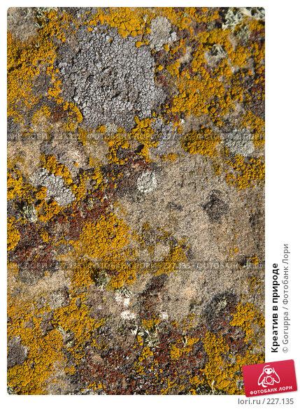 Креатив в природе, фото № 227135, снято 29 июля 2007 г. (c) Goruppa / Фотобанк Лори