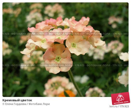 Кремовый цветок, фото № 179923, снято 24 июля 2006 г. (c) Елена Гордеева / Фотобанк Лори