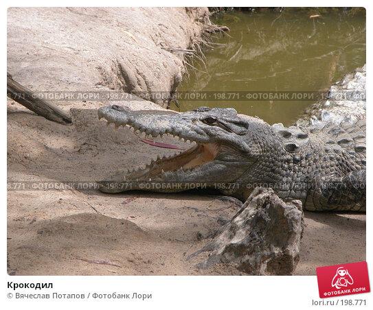 Крокодил, фото № 198771, снято 19 октября 2006 г. (c) Вячеслав Потапов / Фотобанк Лори
