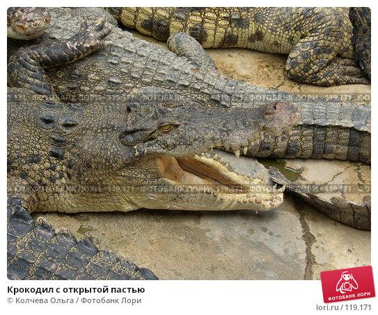 Крокодил с открытой пастью, фото № 119171, снято 25 марта 2007 г. (c) Колчева Ольга / Фотобанк Лори