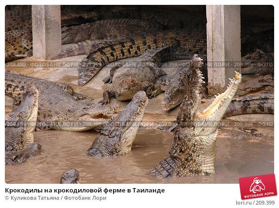 Крокодилы на крокодиловой ферме в Таиланде, фото № 209399, снято 30 ноября 2005 г. (c) Куликова Татьяна / Фотобанк Лори