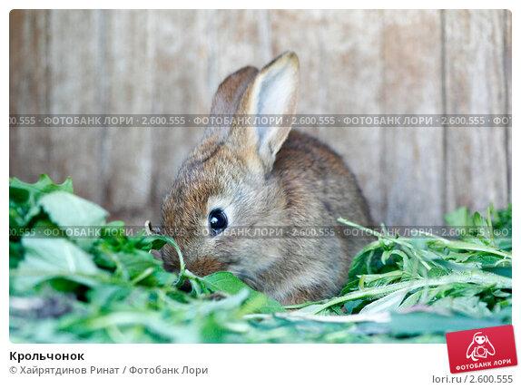 Купить «Крольчонок», фото № 2600555, снято 9 июня 2011 г. (c) Хайрятдинов Ринат / Фотобанк Лори