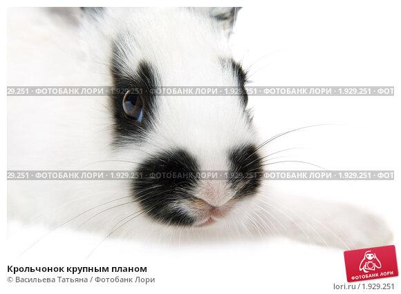 Купить «Крольчонок крупным планом», фото № 1929251, снято 4 августа 2010 г. (c) Васильева Татьяна / Фотобанк Лори