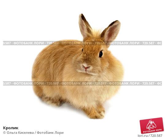 Кролик. Стоковое фото, фотограф Ольга Киселева / Фотобанк Лори