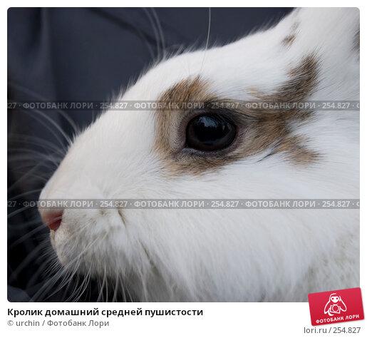Кролик домашний средней пушистости, фото № 254827, снято 12 апреля 2008 г. (c) urchin / Фотобанк Лори