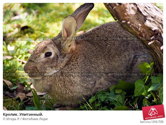 Кролик. Упитанный., фото № 310735, снято 31 мая 2008 г. (c) Игорь Р / Фотобанк Лори