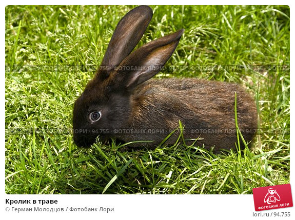 Кролик в траве, фото № 94755, снято 3 июня 2007 г. (c) Герман Молодцов / Фотобанк Лори