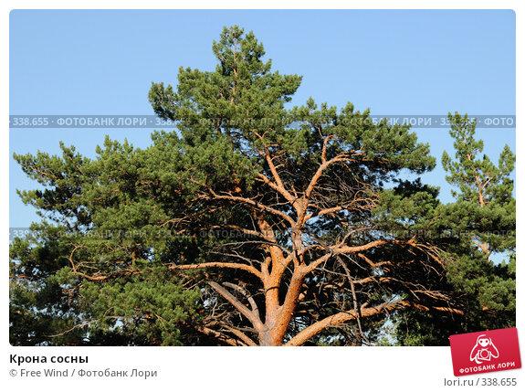 Крона сосны, эксклюзивное фото № 338655, снято 25 июня 2008 г. (c) Free Wind / Фотобанк Лори
