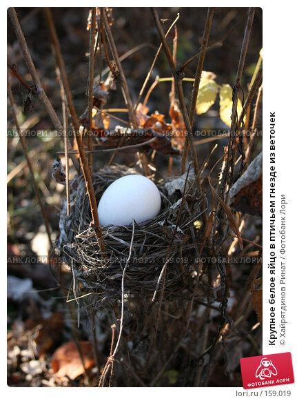 Купить «Крупное белое яйцо в птичьем гнезде из веточек», фото № 159019, снято 12 октября 2005 г. (c) Хайрятдинов Ринат / Фотобанк Лори