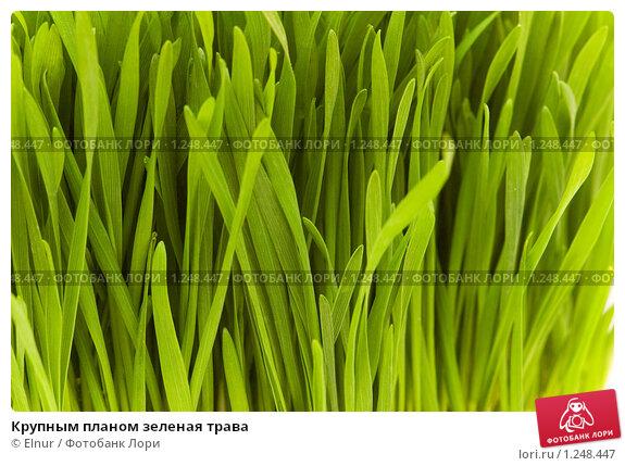 Купить «Крупным планом зеленая трава», фото № 1248447, снято 16 марта 2008 г. (c) Elnur / Фотобанк Лори