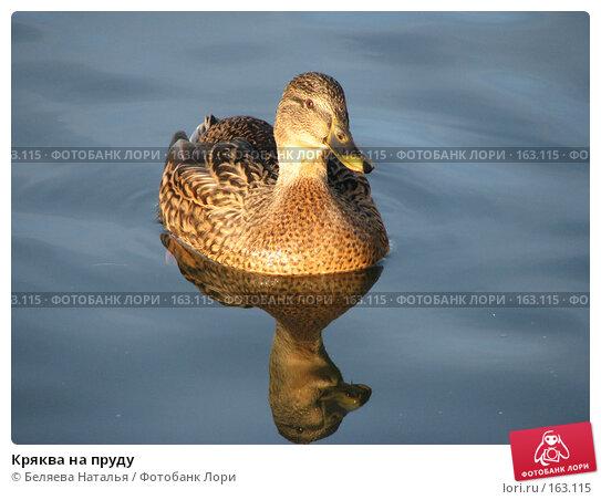 Кряква на пруду, фото № 163115, снято 21 октября 2007 г. (c) Беляева Наталья / Фотобанк Лори