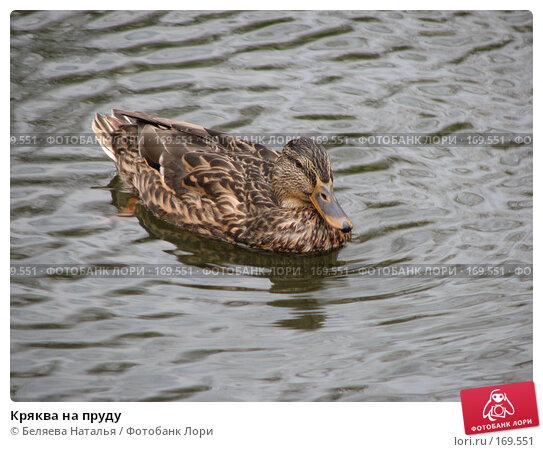 Кряква на пруду, фото № 169551, снято 8 октября 2007 г. (c) Беляева Наталья / Фотобанк Лори