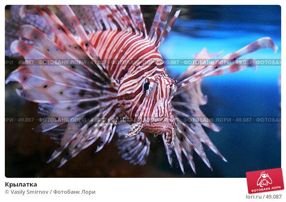 Крылатка, фото № 49087, снято 4 декабря 2004 г. (c) Vasily Smirnov / Фотобанк Лори