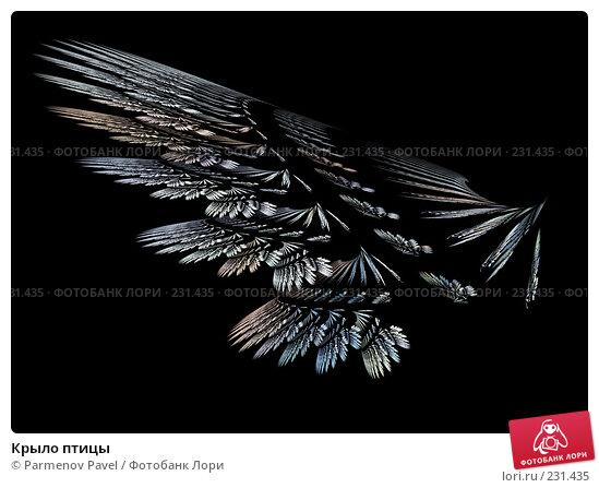 Купить «Крыло птицы», иллюстрация № 231435 (c) Parmenov Pavel / Фотобанк Лори