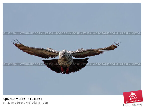 Крыльями обнять небо, фото № 87239, снято 27 мая 2007 г. (c) Alla Andersen / Фотобанк Лори