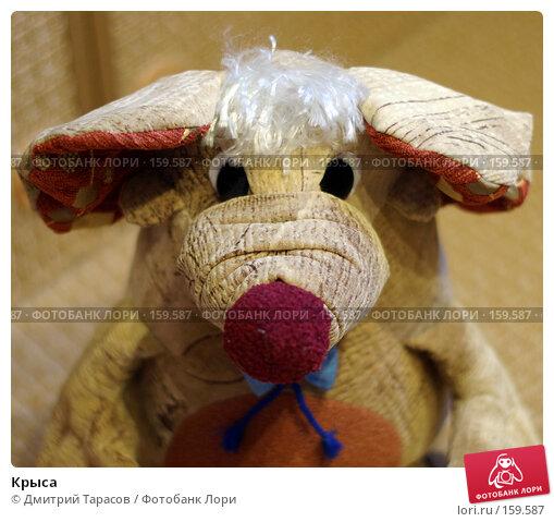 Крыса, фото № 159587, снято 19 декабря 2007 г. (c) Дмитрий Тарасов / Фотобанк Лори