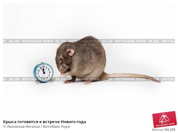 Крыса готовится к встрече Нового года, фото № 84239, снято 15 сентября 2007 г. (c) Лисовская Наталья / Фотобанк Лори
