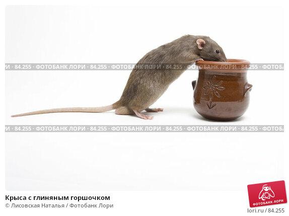 Крыса с глиняным горшочком, фото № 84255, снято 15 сентября 2007 г. (c) Лисовская Наталья / Фотобанк Лори