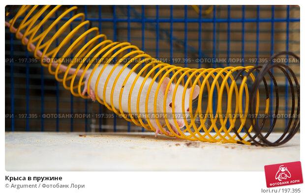 Крыса в пружине, фото № 197395, снято 29 января 2008 г. (c) Argument / Фотобанк Лори