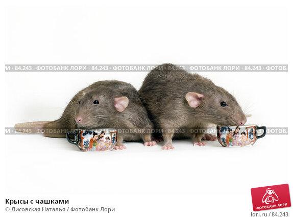 Крысы с чашками, фото № 84243, снято 15 сентября 2007 г. (c) Лисовская Наталья / Фотобанк Лори