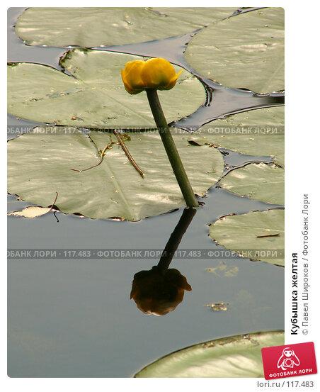 Кубышка желтая, эксклюзивное фото № 117483, снято 22 октября 2016 г. (c) Павел Широков / Фотобанк Лори