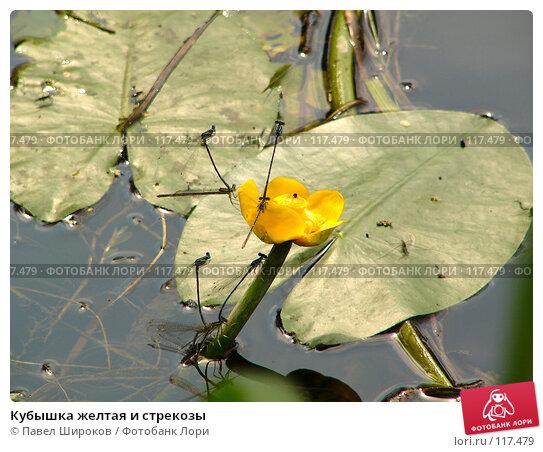 Кубышка желтая и стрекозы, эксклюзивное фото № 117479, снято 26 апреля 2017 г. (c) Павел Широков / Фотобанк Лори
