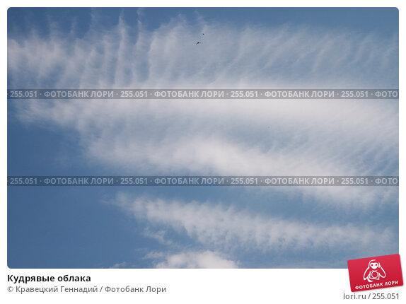 Купить «Кудрявые облака», фото № 255051, снято 5 мая 2004 г. (c) Кравецкий Геннадий / Фотобанк Лори